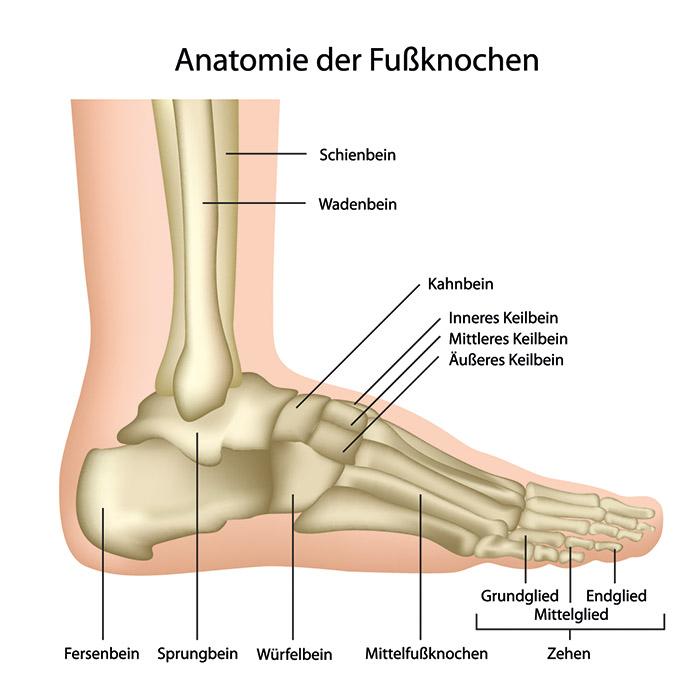 Großartig Knochen Im Sprunggelenk Fotos - Menschliche Anatomie ...